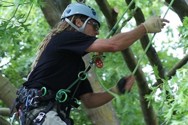 NZARB 2015 REGIONAL TREE CLIMBING DATES